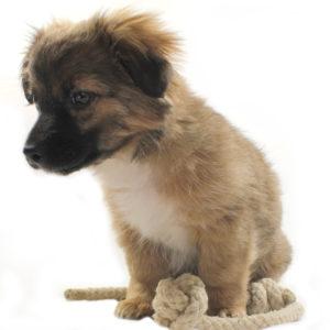 Hunde Spieltau Knoten aus Hanf