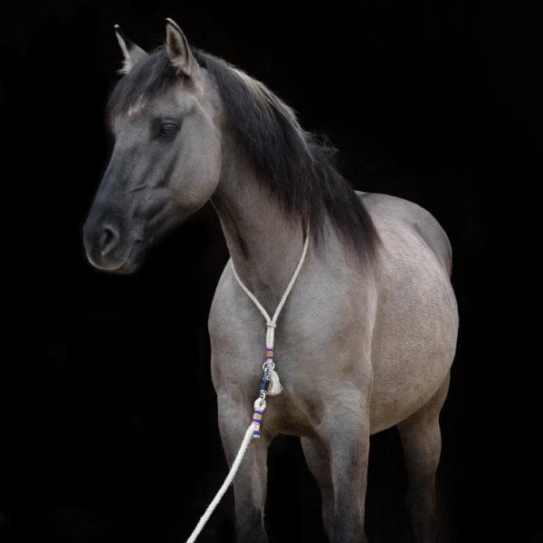 Halsring mit Führstrick Pferde, Freiarbeitslonge