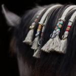 Halsring-Balancezügel-Pferd-Reiten